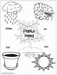 growing plants worksheets kindergarten 13575 introduction to herbs for meet my friend herb part 2 your best diy projects parts of