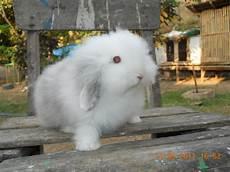 Graha Kelinci