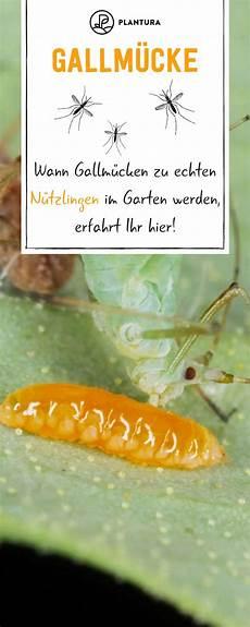 Rote Ameisen Im Garten Neu Die 133 Besten Bilder
