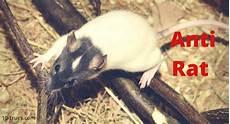 faire fuir les souris comment faire fuir les souris le comment faire