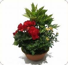 Livraison Fleurs Enterrement Fleur De