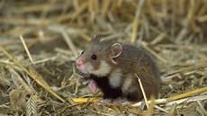 hochrisiko arten diese tiere sind in deutschland akut