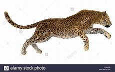 3d digital render of a jumping leopard isolated on white