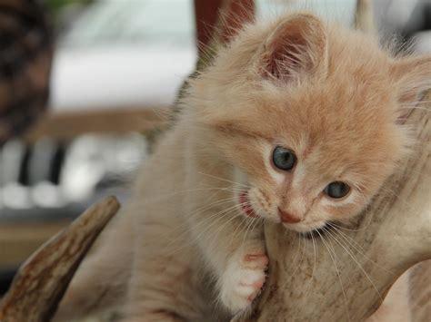Kitten Freeones