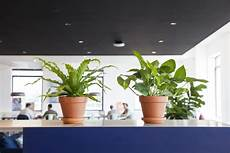 how to choose the best office plant for your work space architectural digest