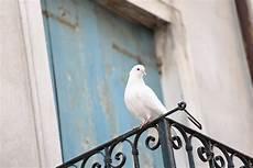 taubennetz f 252 r balkon vogelnetz richtig anbringen funktion