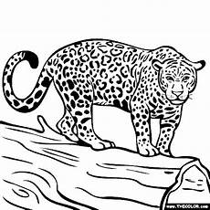 jaguar coloring pages only coloring pages