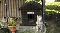 siberian husky dog house plans house design ideas