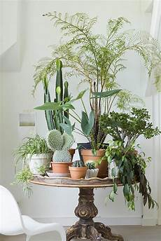 Home Decor Ideas Plants by 10 Happy Living Room Ideas With Plants Modern Home Decor