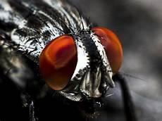 insekt an fauligem obst genmanipulierte insekten k 246 nnten internationalen