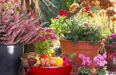 balkonpflanzen herbst winter balkonpflanzen die im herbst bl 252 hen 187 eine auswahl der