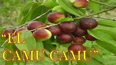 Camu Camu - el camu camu propiedades y beneficios para la salud
