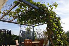 pergola v 233 g 233 tale plantes grimpantes et design