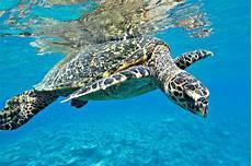 malvorlagen unterwasser tiere um tiere meer archive kostenlose malvorlagen