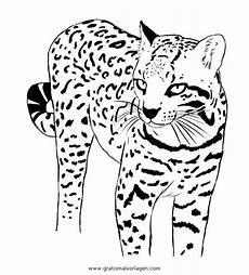 Tier Malvorlagen Quest Ozelot Gratis Malvorlage In Tiere Tiger Ausmalen