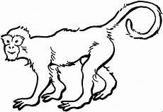Malvorlagen Tiere Affen Affe Mit Ringelschwanz Ausmalbild Malvorlage Tiere