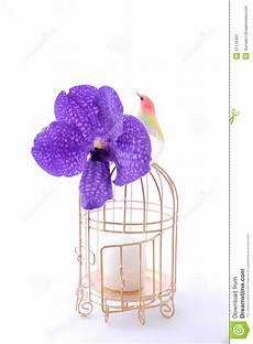 Malvorlage Vogel Mit Blume Vogel Mit Rahmen Und Blume Stockbild Bild Inneres