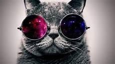 Cool Cat With Glasses Background Ololoshenka