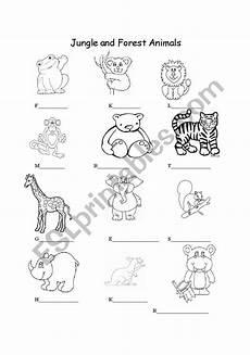 rainforest animals worksheets elementary 13860 jungle and forest animals esl worksheet by lidiana73