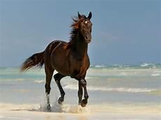 cool wallpaper of horses wallpapersafari