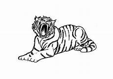 Malvorlagen Tiger Motor Pictures Of Tigers To Color Coloring Home
