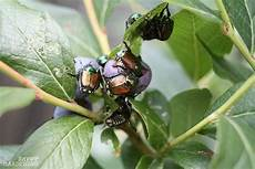 identifying garden pests how to figure out who s eating your plants