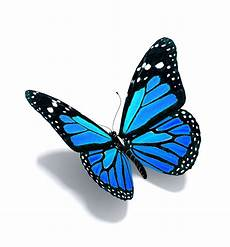 Stan S Apple 26 Butterflies Welcome Realistic Butterfly