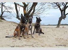 De Mechelse Herder / Witjesverzendhuis.com
