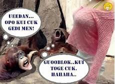 Monyet Gambar Lucu Dan Unik