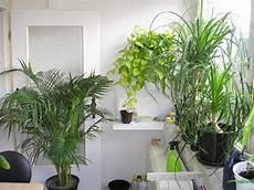 elpflanzen und hängepflanzen garten pflanzen im schlafzimmer pflanzenfreunde