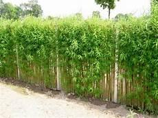 Alternative Zu Zaun Und Hecke Zaun Garten Garten