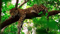 belize jungle tours in the first ever designated jaguar preserve
