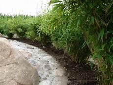 Hecken Aus Bambus Bambus Fargesia Murielae Direkt Vom