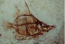 fossils across the fruited plain