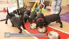 famille d accueil pour chien pendant les vacances devenir famille d accueil pour chien guide minutefacile
