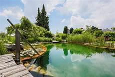 Klares Wasser Im Teich Das M 252 Ssen Sie Daf 252 R Tun