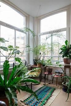 große pflanzen fürs wohnzimmer inspirierende dekoideen kleiner innen gartenbereich gartenprodukte indoor garten und innengarten