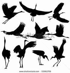 Malvorlagen Wolf Hill 34 Best Sandhill Cranes Images On