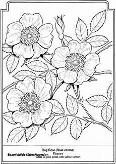Blumen Malvorlagen Kostenlos Zum Ausdrucken Neu Malvorlagen Blumen Neu Blumenbilder Zum Ausmalen