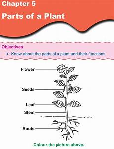 science worksheets about plants for grade 1 12109 grade 1 science lesson 5 parts of a plant primary science