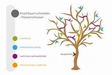 Kirschbaum Schneiden Bebilderte Anleitung F 252 R Den