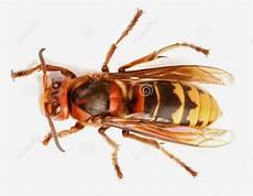 Gambar Lebah Gallery