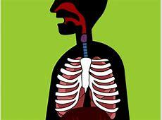 humans respiratory system