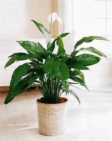 plantes vertes d int 233 rieur 40 propositions pour changer