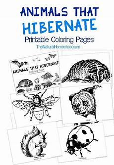 free printable coloring pages hibernating animals 17014 the world s catalog of ideas