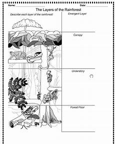 rainforest animals worksheets elementary 13860 rainforest layers printable the children are our future teach them well and let them lead the