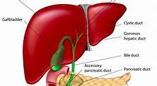 10 Organ Paling Berat Manusia Blogcask