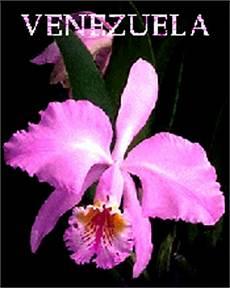 dibujos de la flor nacional de venezuela la orqu 237 dea flor nacional