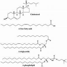 lipid simple english wikipedia the free encyclopedia