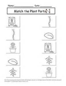 kinds of plants worksheets for kindergarten 13653 image result for types of plants worksheets for kindergarten plants worksheets science units